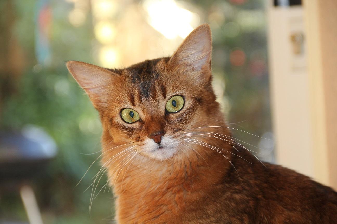 About Foto Cute Cat
